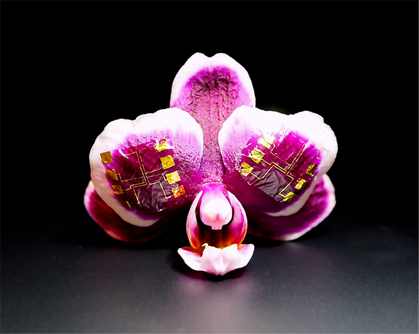IGT on an orchid