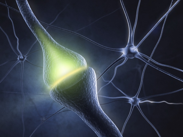 Optogenetics uses light to stimulate, inhibit, and control neuron activity in the brain. Image: Warren Alpert Foundation.